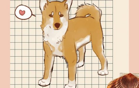 The Most Terrible Reasons You Should Never Adopt a Shiba Inu!